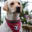 produit-portugais-bandana-pour-chien-portugal-xl_441