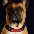 produit-portugais-collier-pour-chien-portugal-t60_445