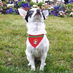 produit-portugais-bandana-pour-chien-portugal-s_438
