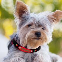 produit-portugais-collier-pour-chien-portugal-t45_443