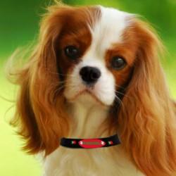 produit-portugais-collier-pour-chien-portugal-t55_444