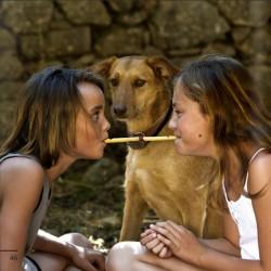 produit-portugais-sifflet-pipeau-des-amoureux_141